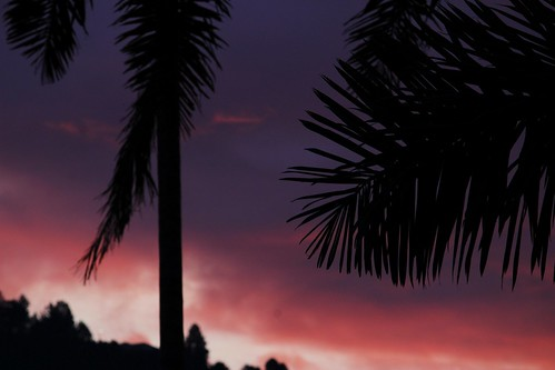 canon 55250mm sunset palmtree fire silhouette silueta atardecer 55250mmf456isstm