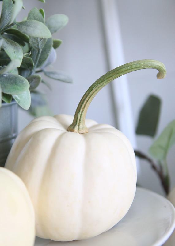 Curvy Green Pumpkin Stem