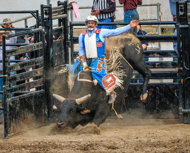 Bulls2017-6.jpg