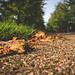 <p><a href=&quot;http://www.flickr.com/people/joriks/&quot;>joriks</a> posted a photo:</p>&#xA;&#xA;<p><a href=&quot;http://www.flickr.com/photos/joriks/37414896475/&quot; title=&quot;Autumn is here ~ 267/365 2017&quot;><img src=&quot;http://farm5.staticflickr.com/4411/37414896475_212dcf39f5_m.jpg&quot; width=&quot;240&quot; height=&quot;160&quot; alt=&quot;Autumn is here ~ 267/365 2017&quot; /></a></p>&#xA;&#xA;
