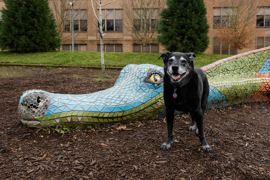 Our dog Ellie stands in front of the dragon statue at Irvington School in Portland, Oregon
