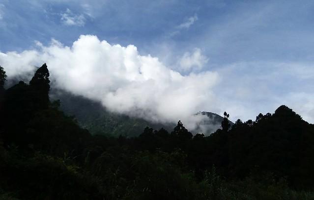 溪頭的山嵐 (4)