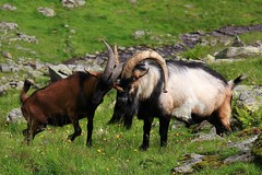 Austria - Mammals