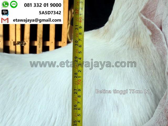 betina-75cm-s-14-20170918