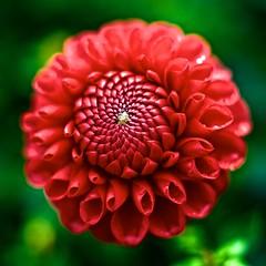 petals unfolding