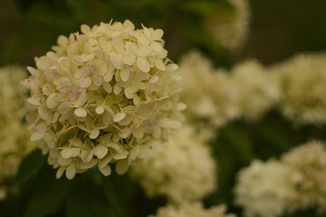 Flowers 35mm, Nikon D3300, AF-S DX Nikkor 35mm f/1.8G