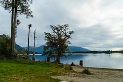 Iveagh Bay, Lake Brunner, West Coast