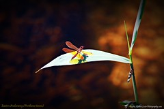 2014-10-15_IMG_6555_ Pinellas Park,Fl_JPG