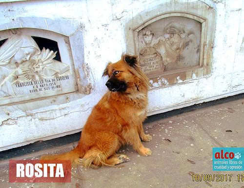 Rosita, hoy en día :)