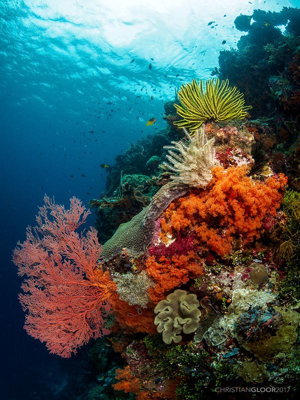 Reef bouquet