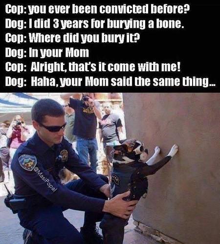 dogarrest1