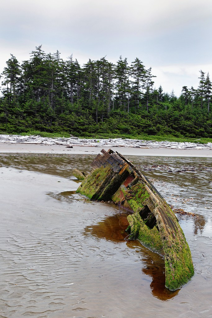 Beach Wreck and Trees