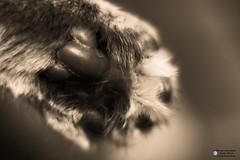 Pfötchen, paws