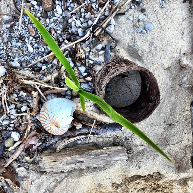 Beach growth.