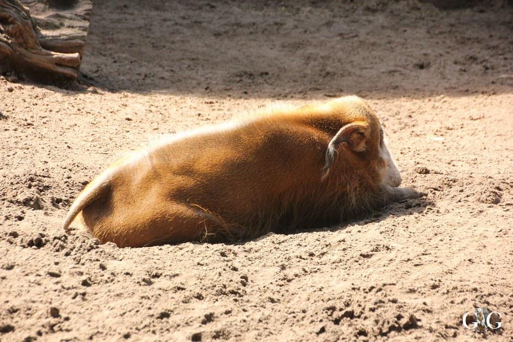 Besuch Zoo Berlin 13.08.17161
