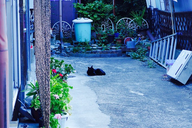 Today's Cat@2017-08-31