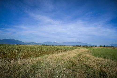 Skagit Fields-7
