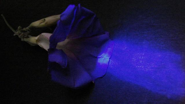 Fragmentry Blue, Sony DSC-H2