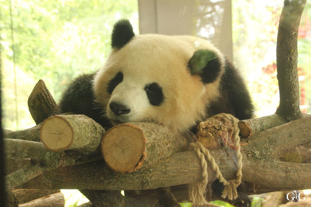 Besuch Zoo Berlin 20.07.201730