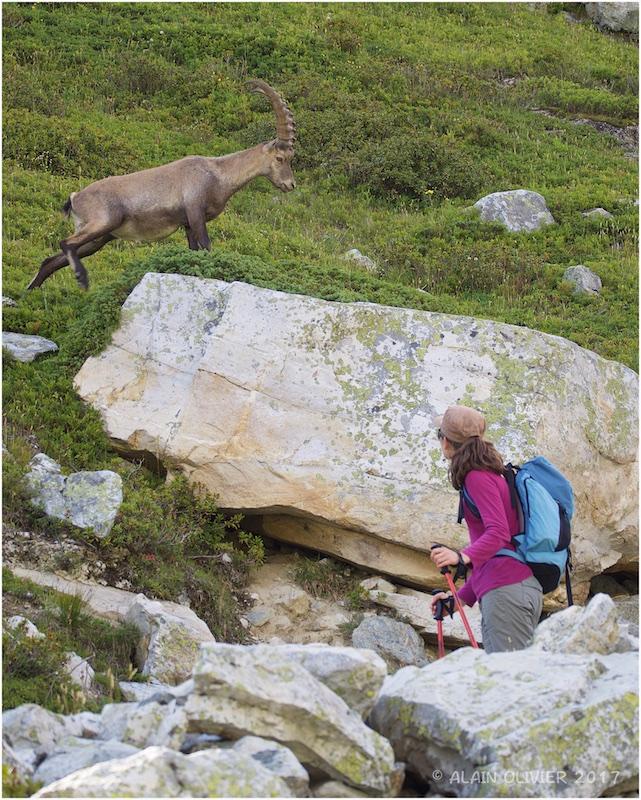 Randonnée au Col de la Vanoise 36382873870_f92cc67e9e_o