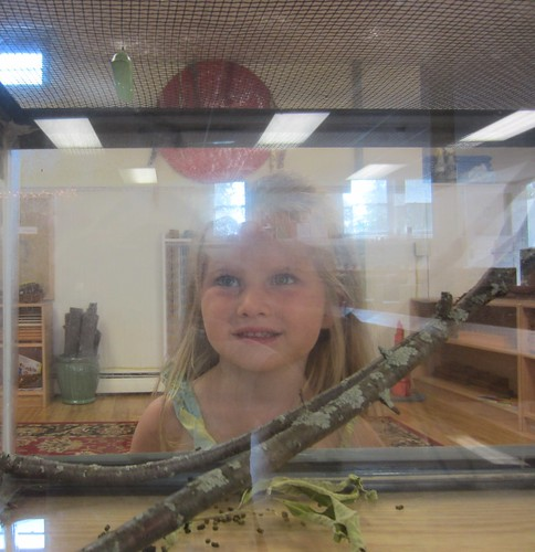 looking at the chrysalis