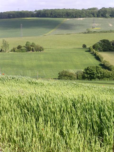 View near Luddesdown