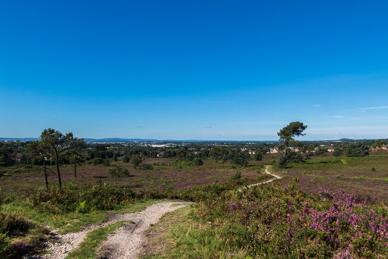 Looking across Canford Heath to Poole