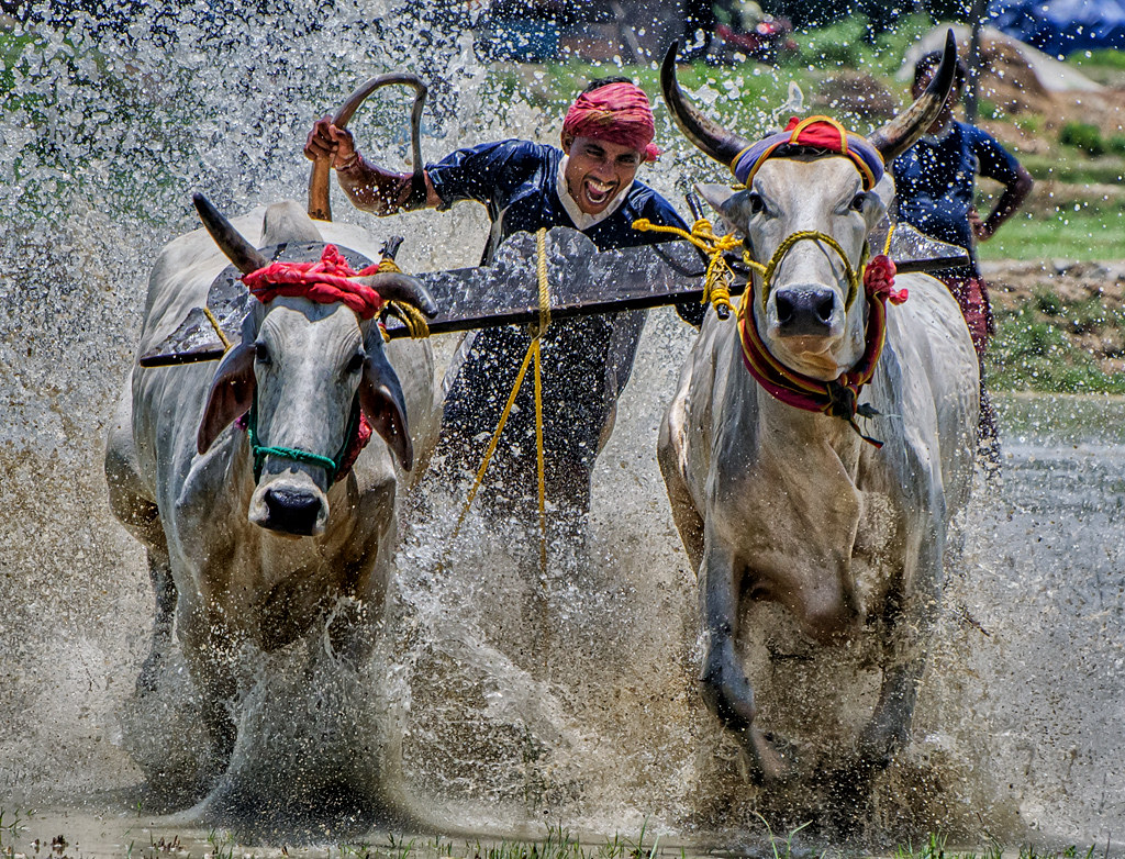 RHG08 RH24 the-bull-race-8a4eca4f17ce727fe720bdf4679b48b688b99980