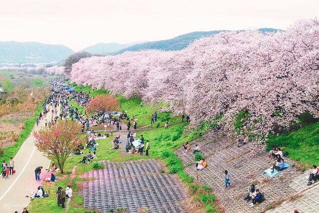 十年,京都四季 | 卷四 | 那兒春色滿城 | 23