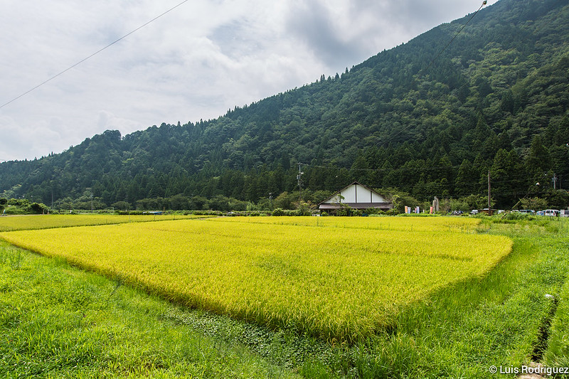Estanque-Monet-Gifu-1