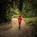 Promenons-nous dans les bois... /A Walk in the Woods