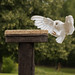 International Birds of Prey Centre (33)
