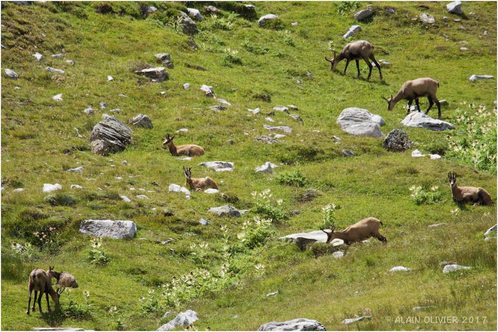Randonnée au Col de la Vanoise 35969120693_5a0ef688b1_o