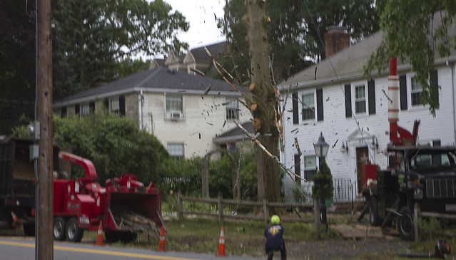 Tree removal at 28 Parker; Wakefield, MA (2017)