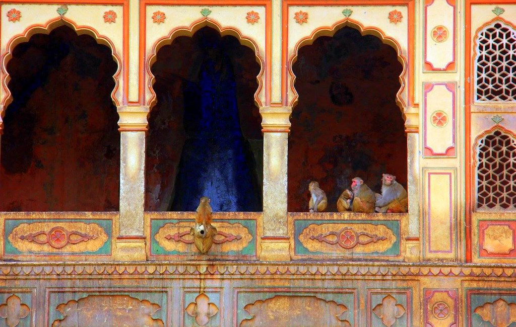 Monkeys sitting at Galtaji in Jaipur