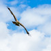 International Birds of Prey Centre (56)