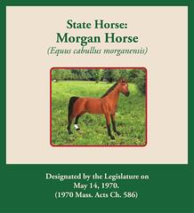State Horse: Morgan Horse (Equus cabullus morganensis)