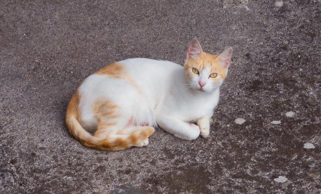 Happy International Cat's Day