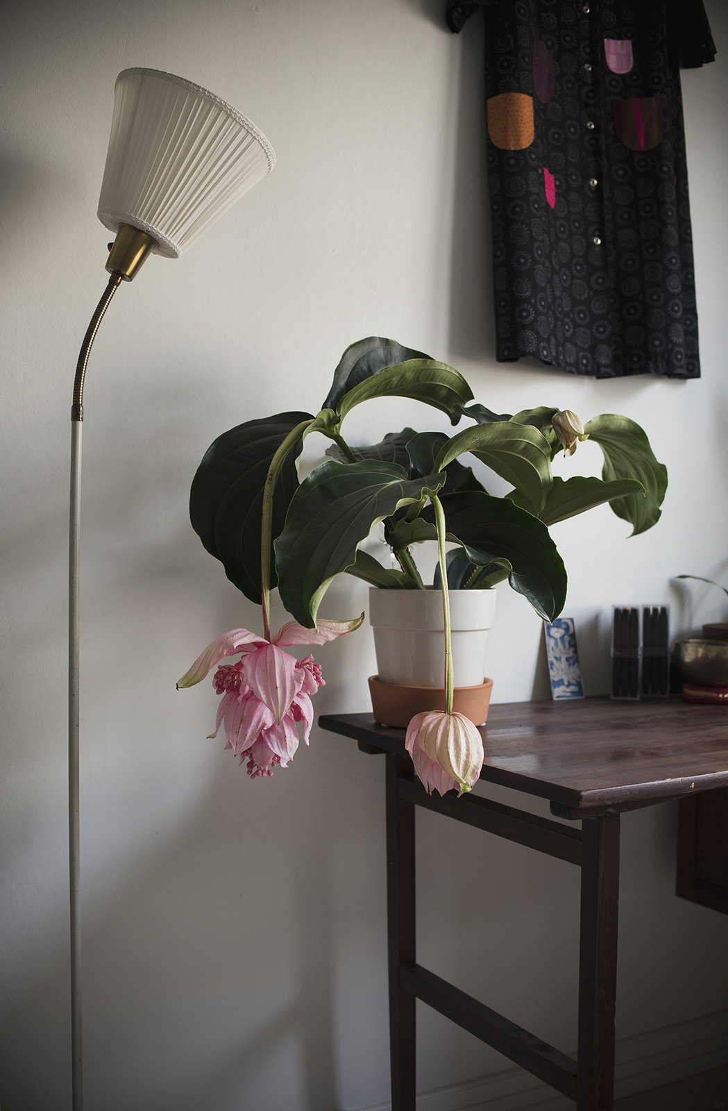 Rosenskärm