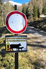 Keep Your Distance Soelkpass Styria Austria Tour (c) 2017 Бернхард Эггер :: ru-moto images 3580
