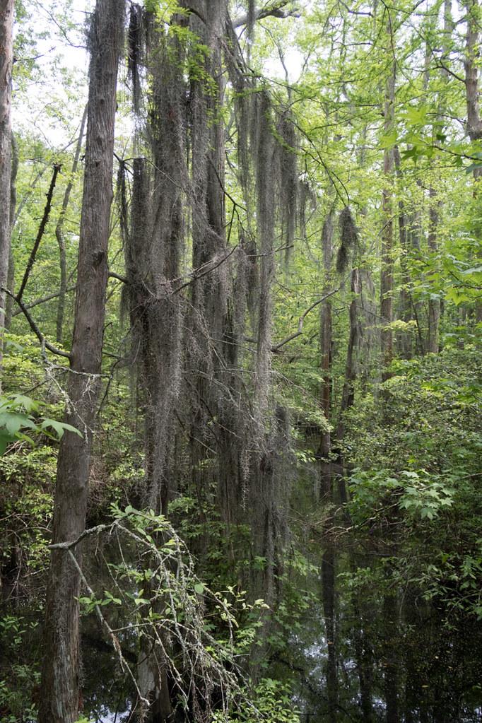 Bald Cypress trail | Trails near Virginia Beach