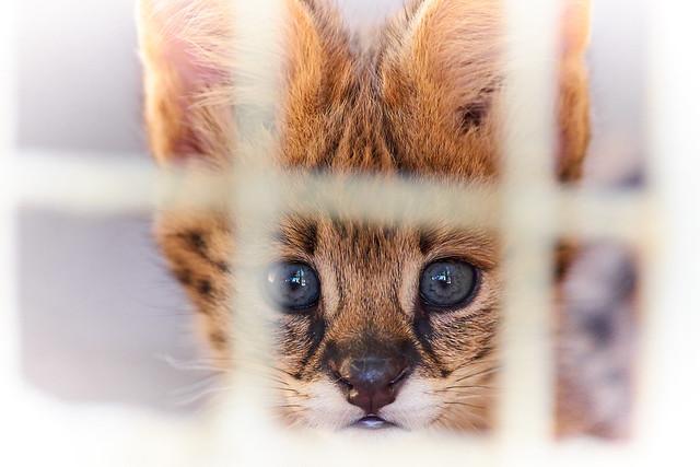 born in jail