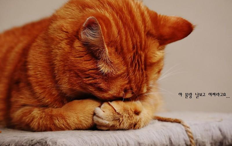 cat-1675422_1280-1024x646