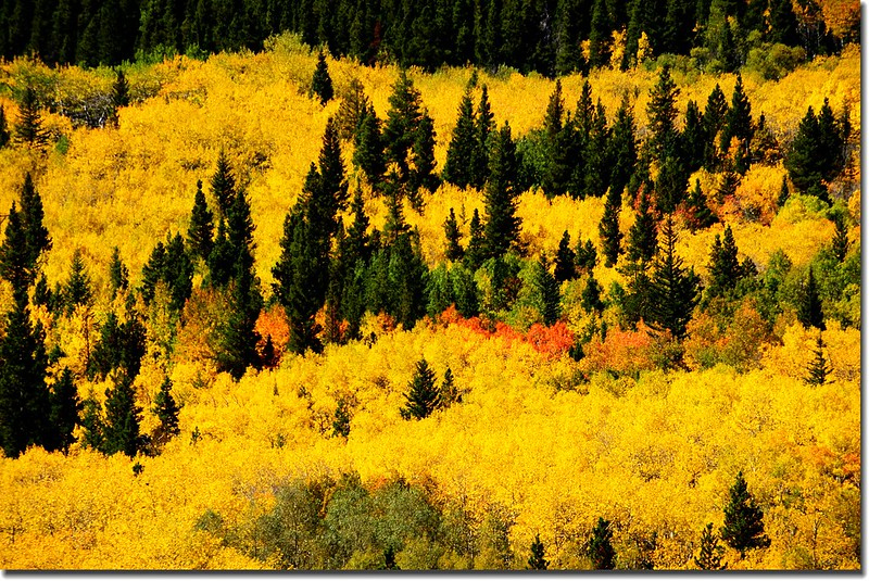 Peak to Peak Scenic Byway in Fall, Colorado (5)