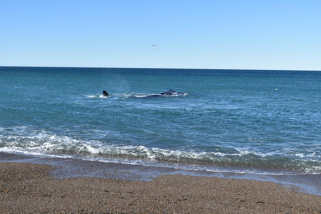 Día 1 - Puerto Madryn
