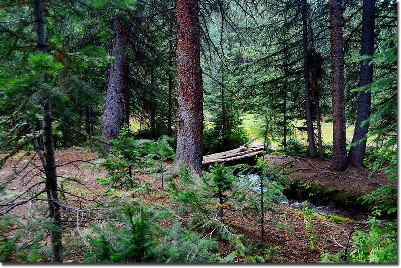 Crossing a log bridge to camping site