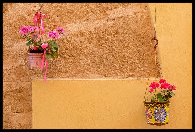 Parella de flors, Alguer