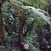 Me under a Tree Fern (Cyathea sp.) ... by berniedup