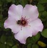 Botanic Gardens-035