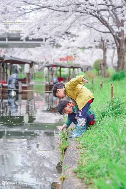十年,京都四季 | 卷四 | 那兒春色滿城 | 11